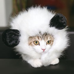 Peruka dla kota